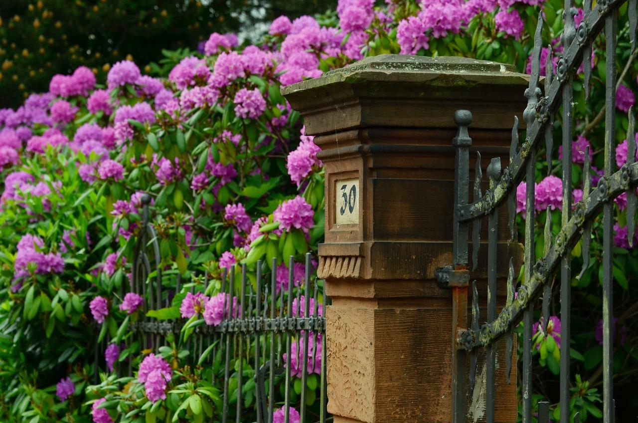 Quelles plantes grimpantes choisir pour ma clôture ?